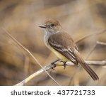 warbler finch is a species of... | Shutterstock . vector #437721733