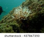 Small photo of Sea Annelida