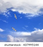 two seagulls hover in sky with... | Shutterstock . vector #437995144