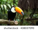 toucan bird on the nature in... | Shutterstock . vector #438037090