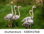 flamingo on a green meadow. | Shutterstock . vector #438041968