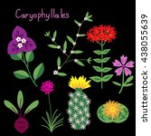 Caryophyllales Plant Order...