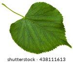 green leaf of tilia...   Shutterstock . vector #438111613