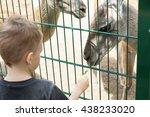 Little Kid Feeding Big Lama...