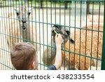 Little Kid Feeding Big Lama On...