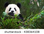 eating panda  | Shutterstock . vector #438364108