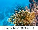 net fire coral   millepora... | Shutterstock . vector #438397744