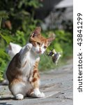 Stock photo cat s game lesbos greece 43841299