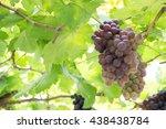 grape vine | Shutterstock . vector #438438784