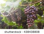 grape vine | Shutterstock . vector #438438808
