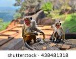 Macaques At Sigiriya Lion Roc...