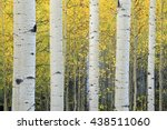 Serene Yellow Aspen Background...