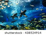 Underwater View Of Marine Life