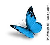 the beautiful flying turquoise... | Shutterstock . vector #438571894