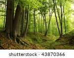 Green Forest With Old Trees
