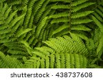 lush and deep green leafy ferns. | Shutterstock . vector #438737608