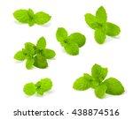 fresh mint isolated on white... | Shutterstock . vector #438874516