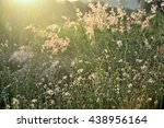 vintage soft focus of dried...   Shutterstock . vector #438956164