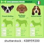 dogs breed vector info graphics ...   Shutterstock .eps vector #438959200