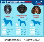 Dogs Breed Vector Info Graphic...