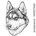 sketch of husky dog. vector...   Shutterstock .eps vector #439027600