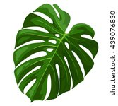 Tropical Leaf Monstera Plant...