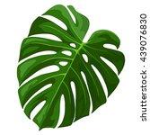 tropical leaf monstera plant... | Shutterstock .eps vector #439076830