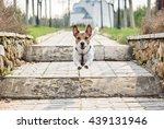 Stock photo dog running by path at park and jumping at ladder 439131946