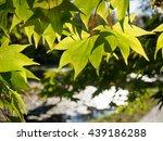 shade of green   Shutterstock . vector #439186288