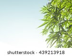 Marijuana Bud On Canopy Of...