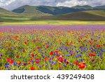 castelluccio di norcia  umbria  ...   Shutterstock . vector #439249408