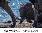 Baby Elephant Playing In Mud...
