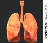 human body organs  lungs... | Shutterstock . vector #439310773