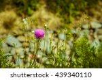 Thorny Purple Wild Flower ...