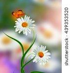Wildflowers Daisies. Summer...