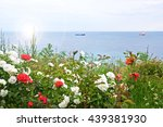 Stock photo blooming seafront city nature landscape roses of bulgaria 439381930