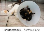 Cat Sick With Collar Looking