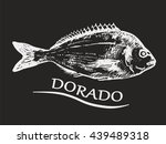 dorado fish hand drawn sketch.... | Shutterstock .eps vector #439489318