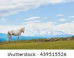 spotted a white horse on a... | Shutterstock . vector #439515526