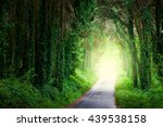 Road In Magic Dark Forest From...