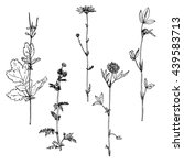 set of ink drawing wild flowers ... | Shutterstock .eps vector #439583713
