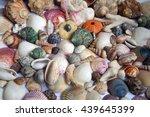 sea shells seashells    variety ... | Shutterstock . vector #439645399