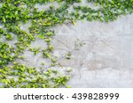 green leaves wall background | Shutterstock . vector #439828999