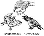 a set of crows   hand drawn... | Shutterstock .eps vector #439905229