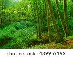 summer fog in the forest | Shutterstock . vector #439959193