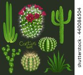 Different Cactus Types...