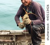 Caught Lobster By Fisherman ...