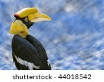 Portrait Of Great Hornbill ...