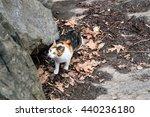 Photo Of Three Color Cat...