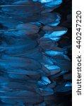 Many Goose Dark Blue Feathers...